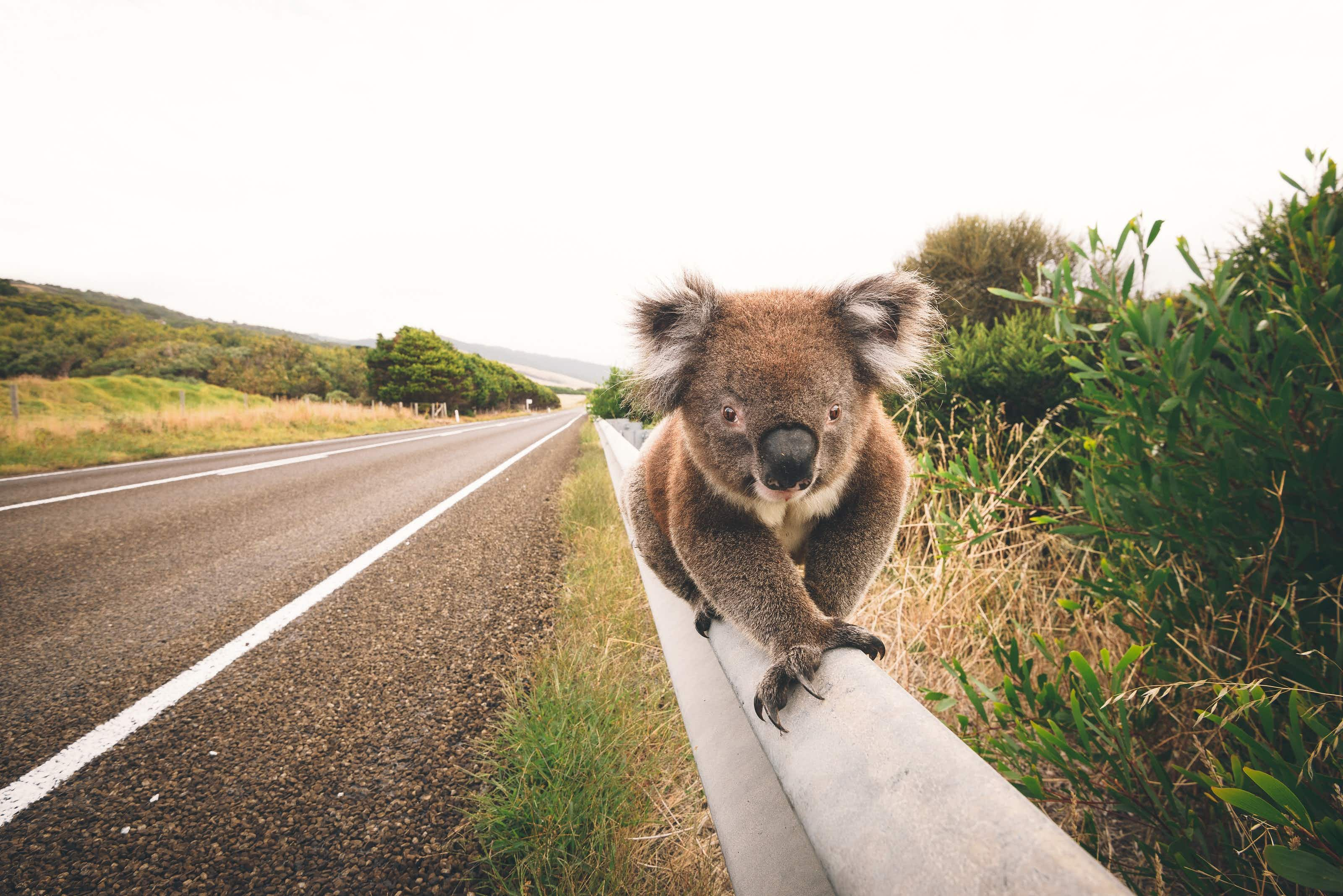 Note: you get the best views on the left passenger side heading down the Great Ocean Road © James O'Neil / Getty