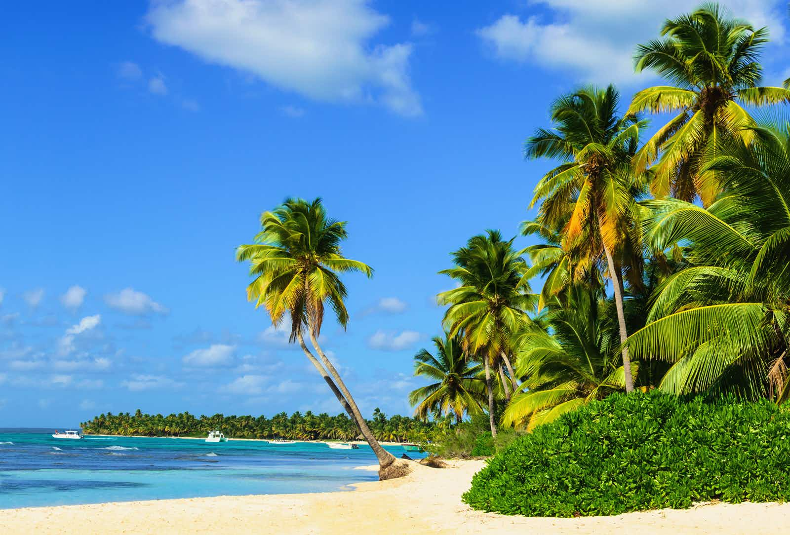 Palm trees and gold sand next to an azure cove