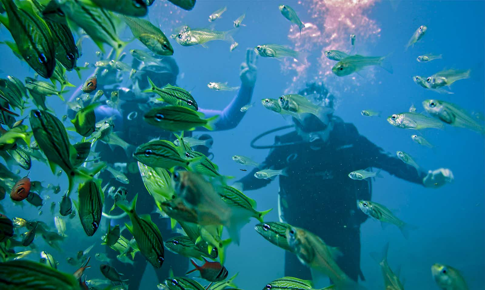 Swim with the fishes (in a good way) at Parque Nacional Tayrona © Jacqui de Klerk / Lonely Planet