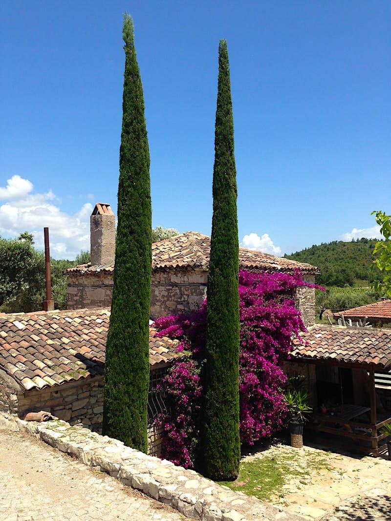 Urlice Vineyards looks like a little slice of Tuscany