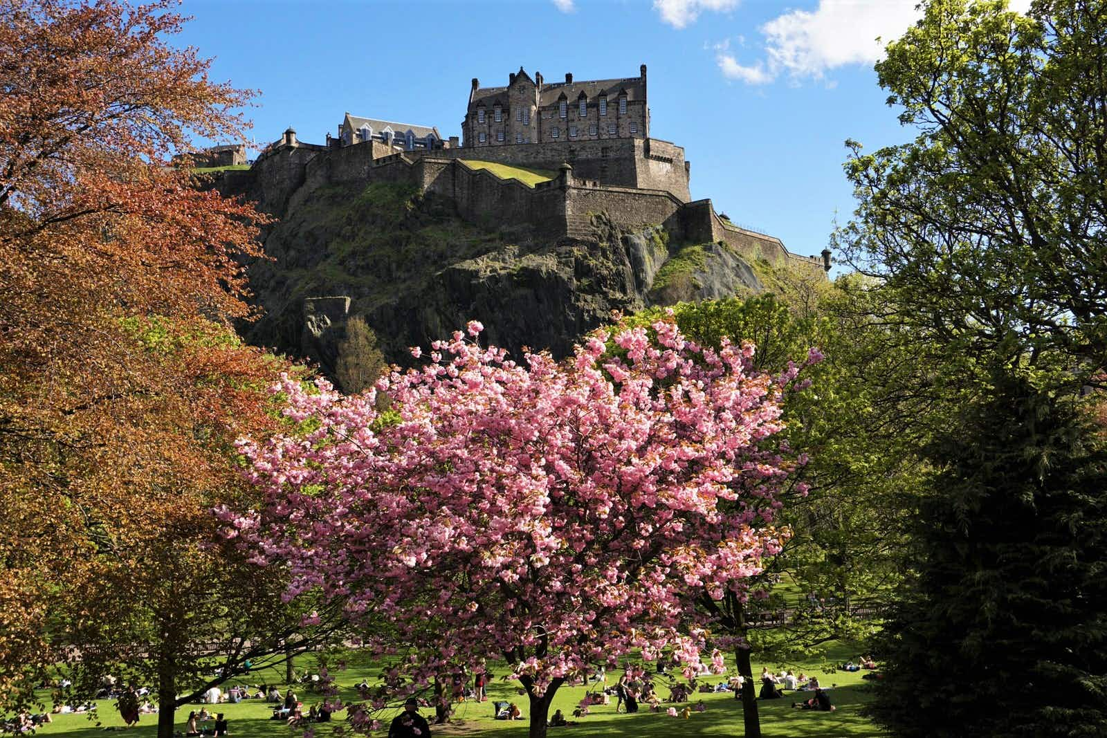 Edinburgh Castle with some spring cherry blossom in the park beneath it