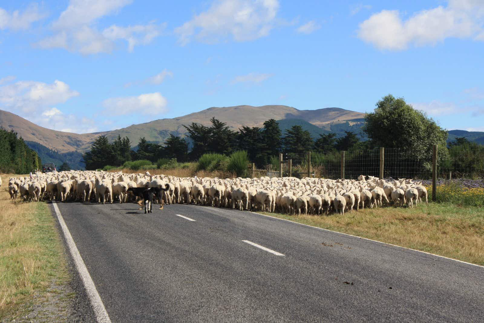 How to WWOOF around New Zealand