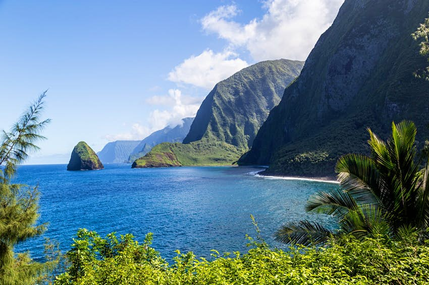 Tall, steep cliffs appear to end directly in the bright blue waters along the island of Moloka'i as lush tropical plants frame the foreground