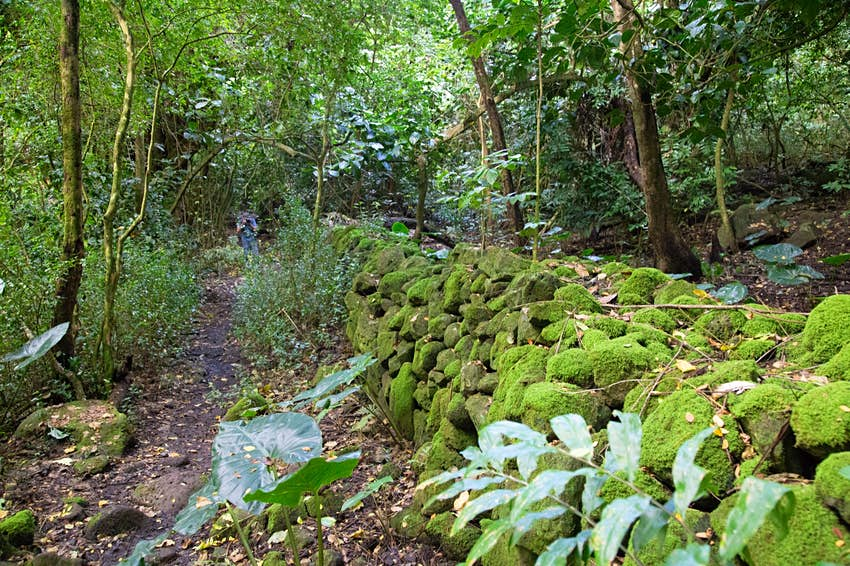 A wall of moss-covered stones stretches through the jungle next to a path