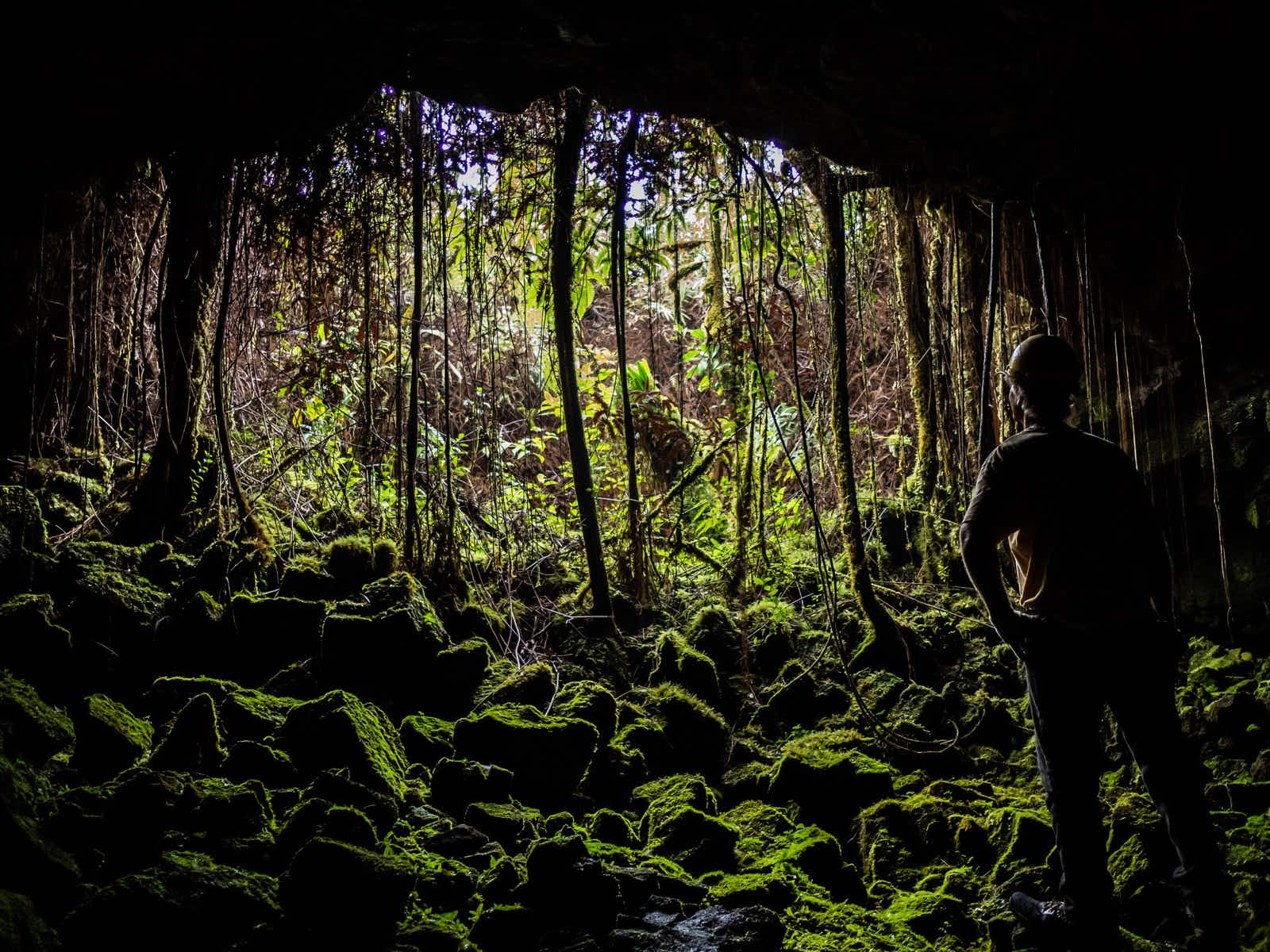 More than 100 entrances in the lush jungle of the Big Island lead to the Kazamura Lava Tube © Shaun Busuttil / Lonely Planet