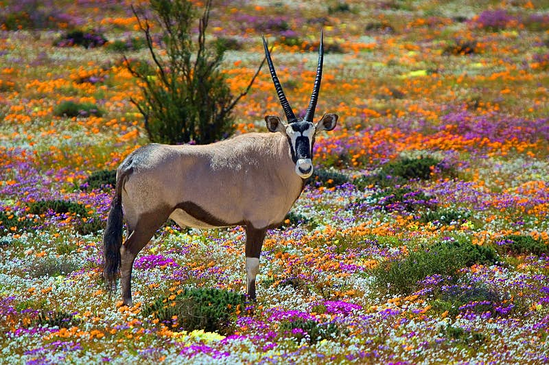 Escape to South Africa's Northern Cape - Lonely Planet
