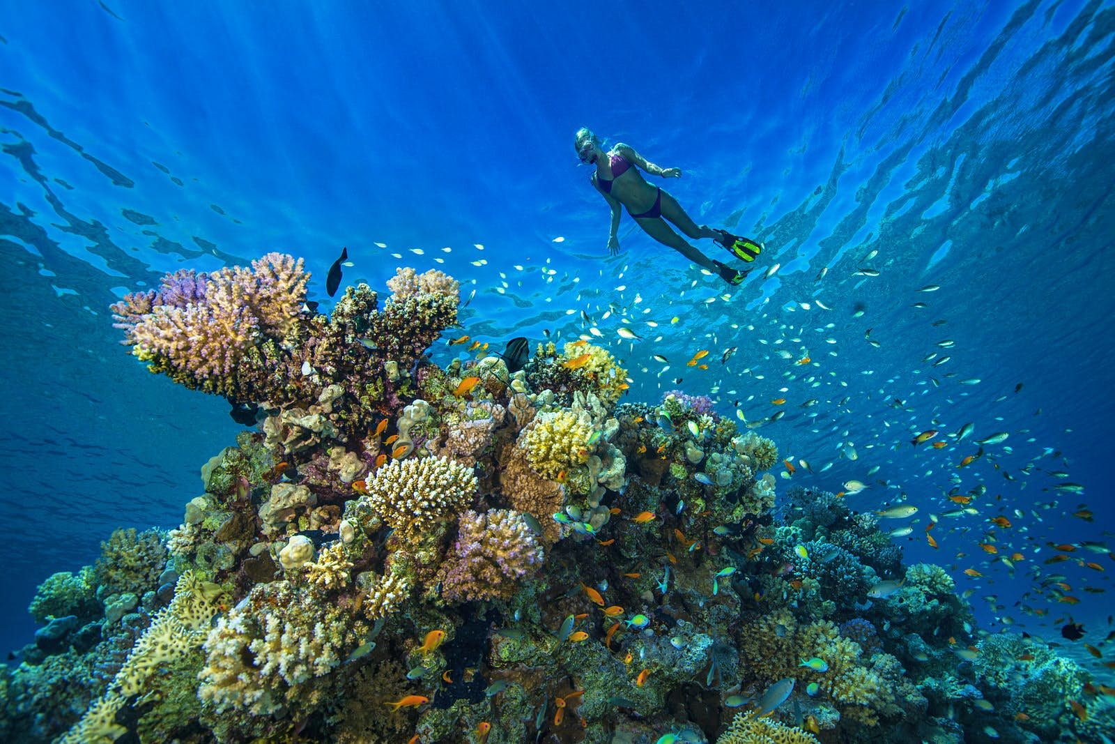 Where To Find The Best Scuba Diving Sites In The Middle