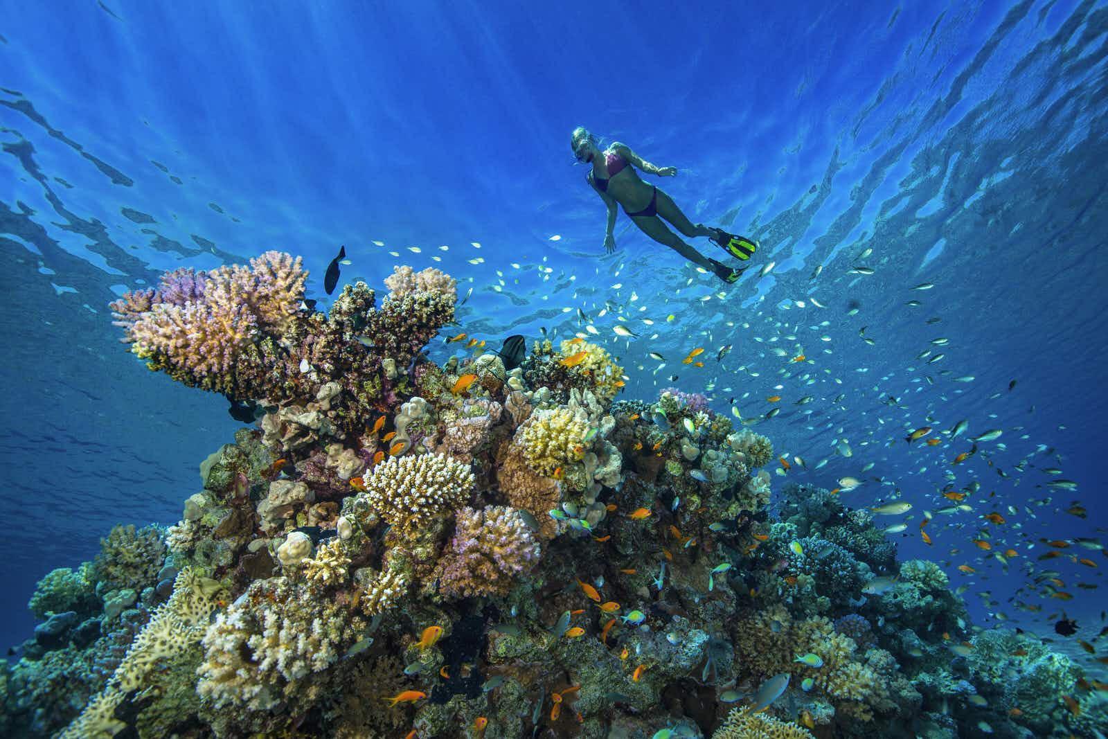ผลการค้นหารูปภาพสำหรับ Red Sea lonely planet