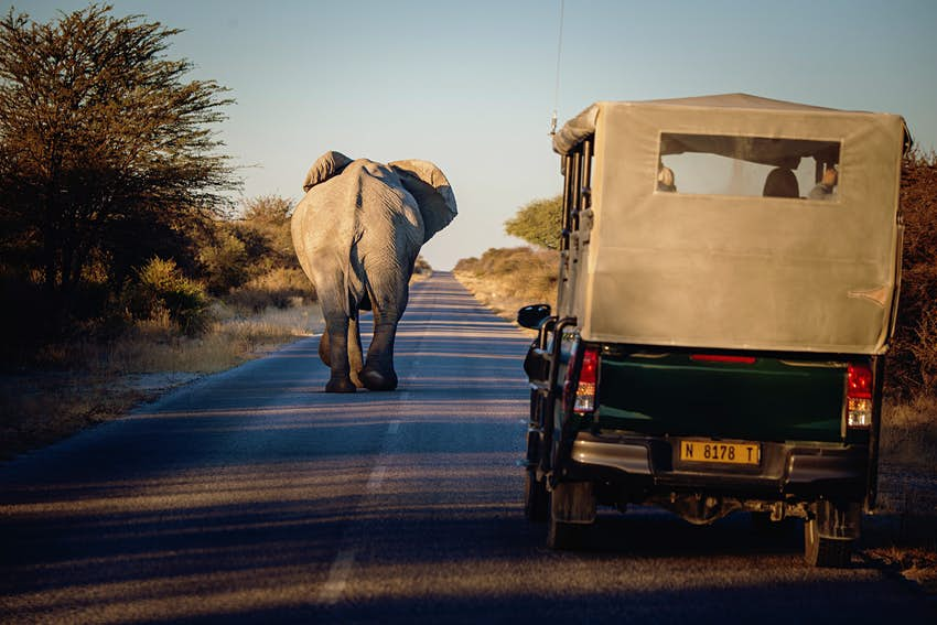 A jeep follows an elephant in Etosha National Park, Namibia