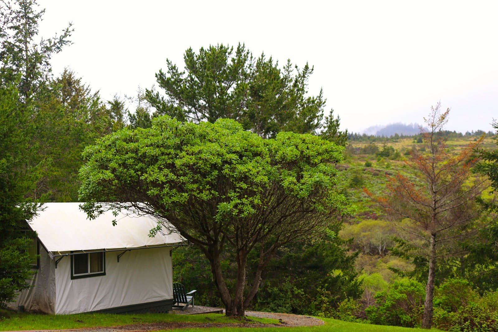 A white tent overlooks a verdant valley next to a large leafy tree