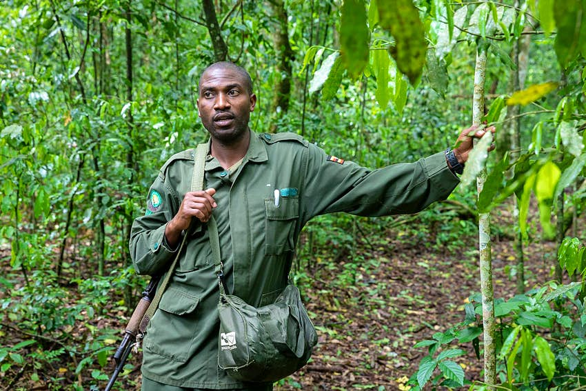 Africano, the Ugandan park guide, stands dressed in his green uniform, with one arm resting on a tree, the other holding the shoulder strap of his rifle © Bella Falk