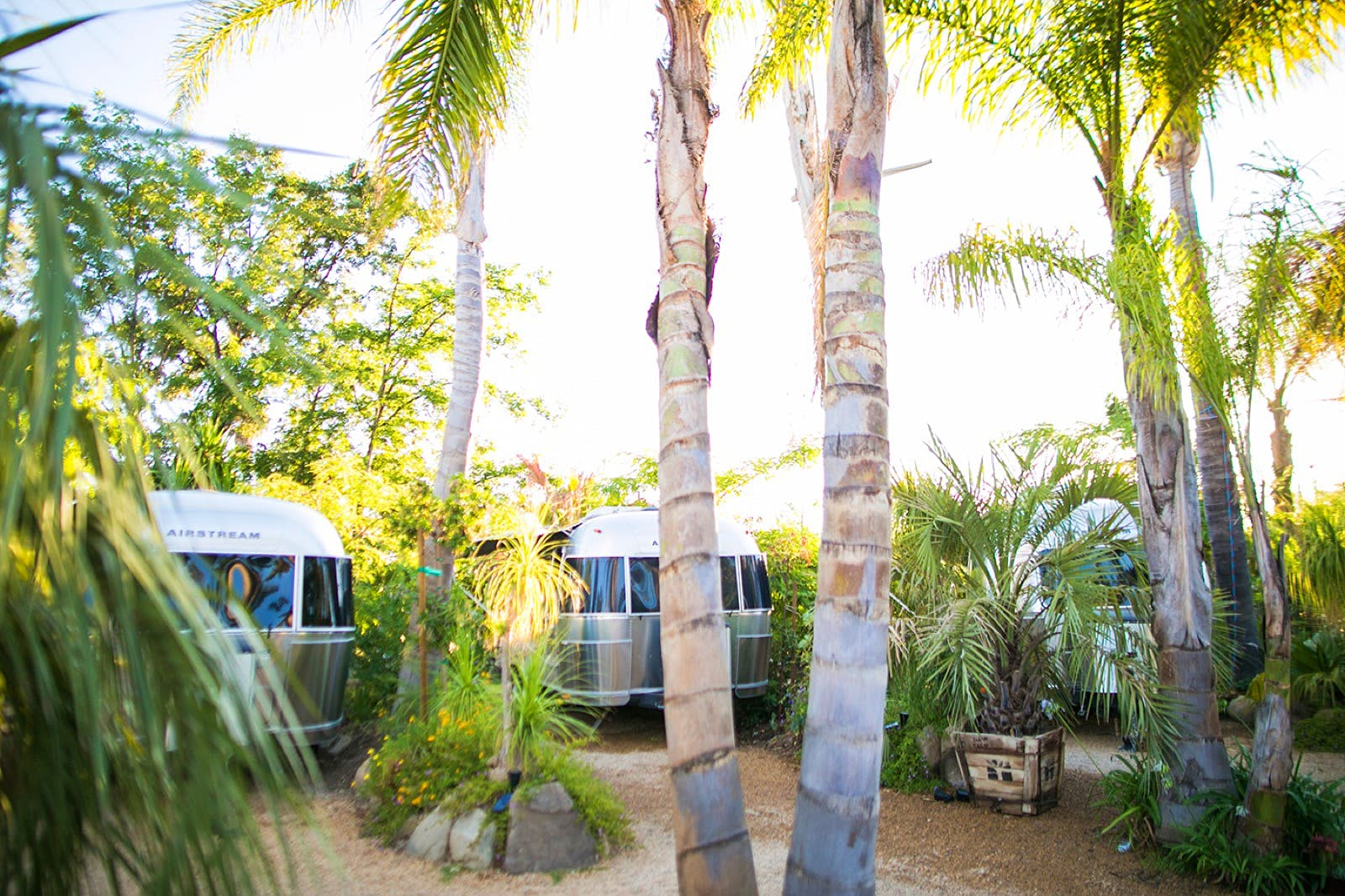 Silver airstream trailers shine in the sun under palm trees