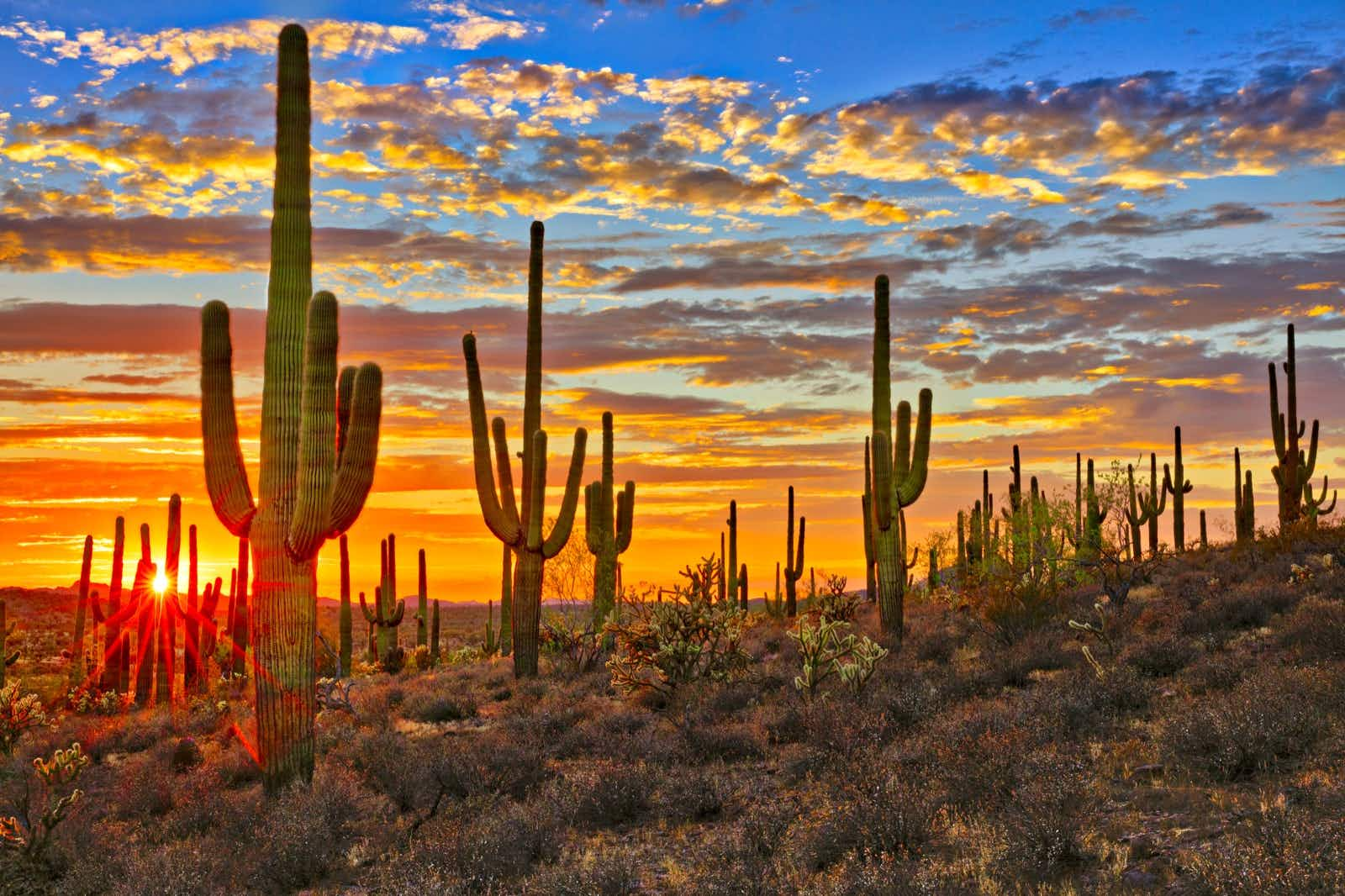 A radiant orange and blue sunset paints the sky behind a row of tall, armed cactuses