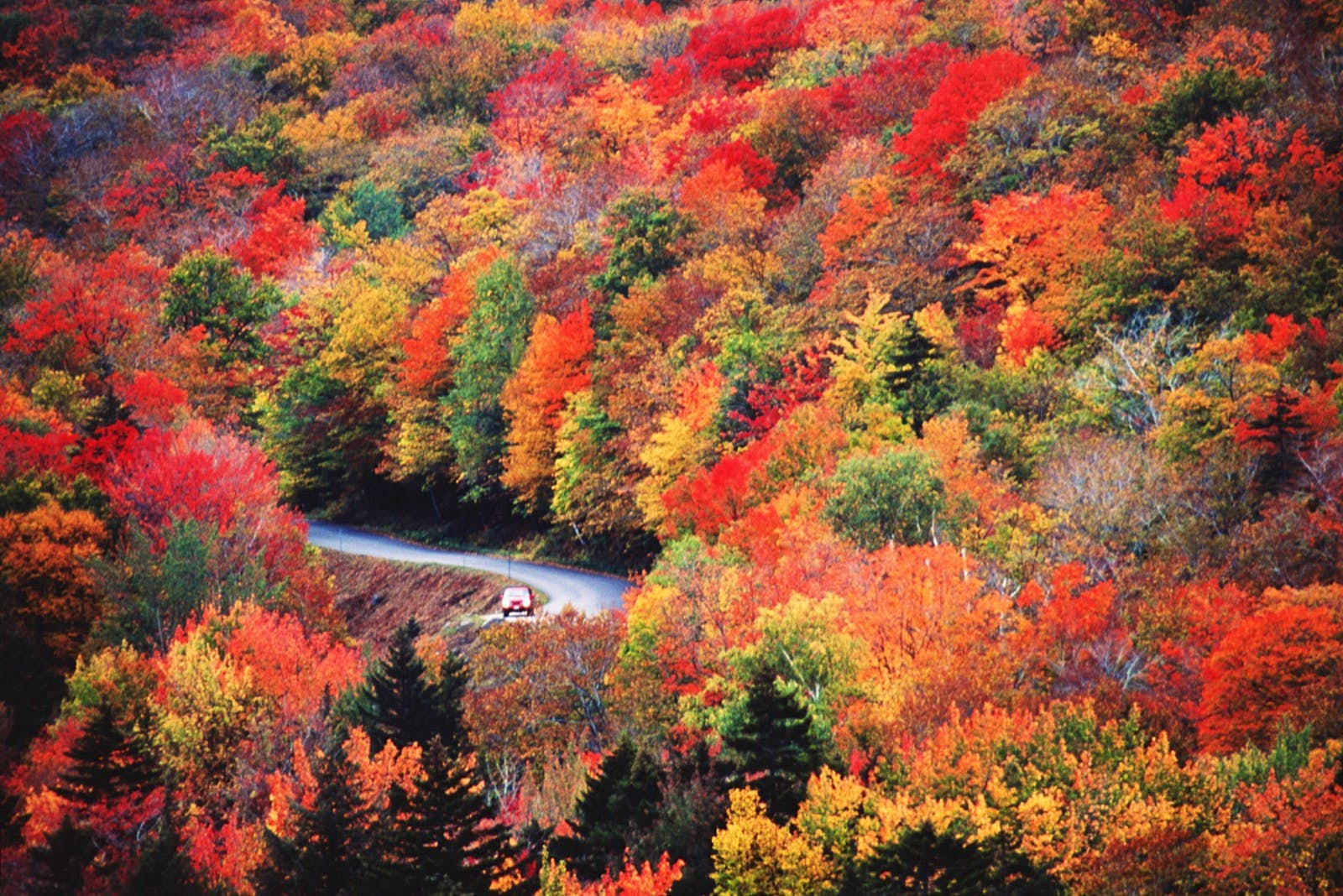 A car drives on a windy road that you can barely see because of the dense orange, red, yellow and green foliage while listening to audiobooks for a US road trip through small-town America.