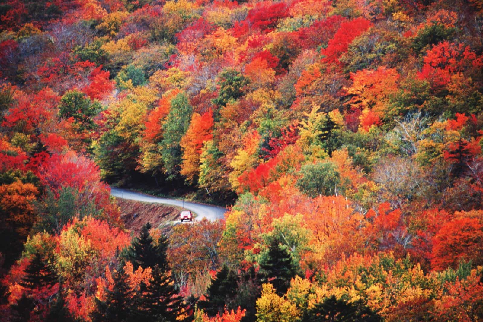 A car drives on a windy road that you can barely see because of the dense orange, red, yellow and green foliage while listening to an audiobook on a US roadtrip