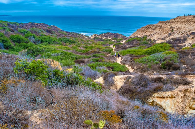 People hike down a sandy path to the beach surrounded by low chaparral, cacti and sand on a perfect weekend in San Diego