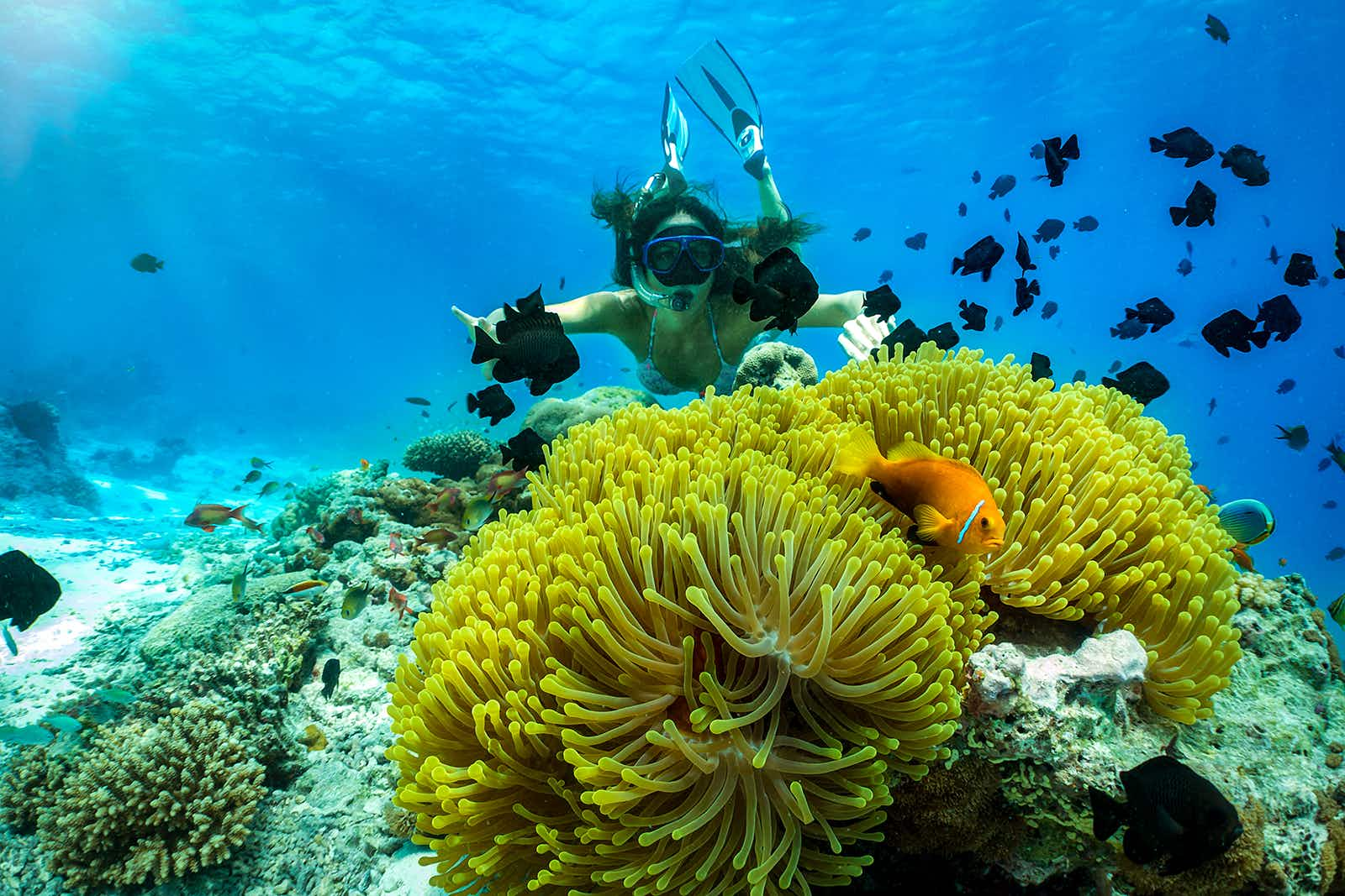 Coral reefs are fragile ecosystems – do your part by wearing environmentally-friendly sunscreen © Sven Hansche / Shutterstock