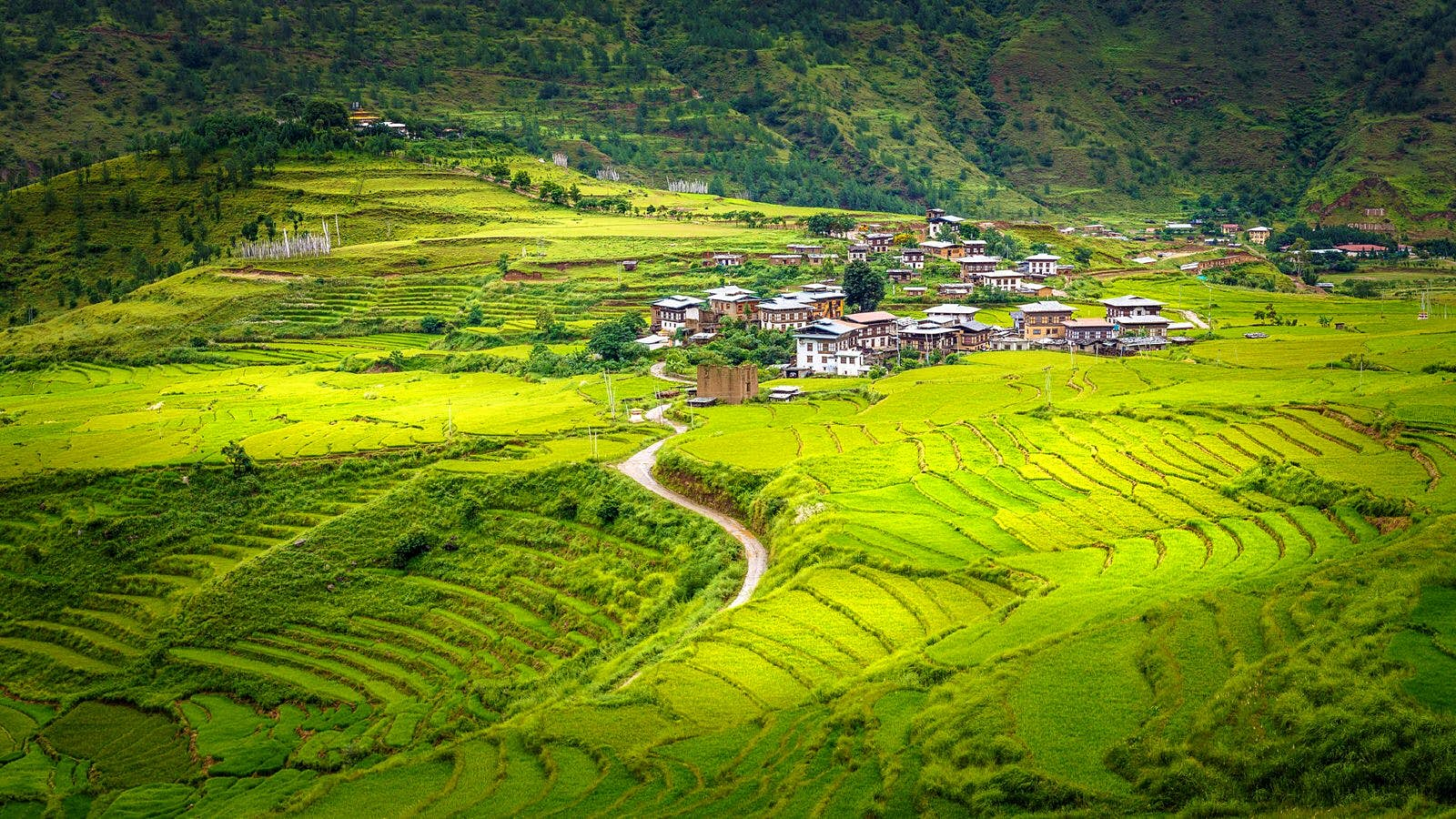 Landscape of green rice terraces in a fertile valley with Chimi Lhakhang Temple in the middle