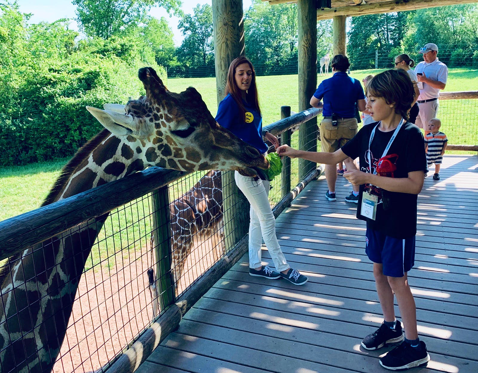 A boy feeds a giraffe at a zoo; midwest travel ideas