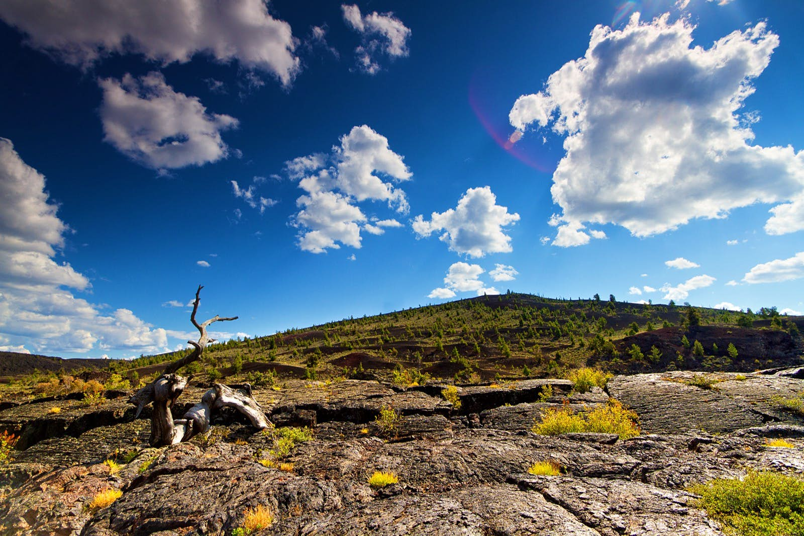 Lone dead tree in foreground and large stretches of lava rock with partially forested hill in background on partly cloudy summer afternoon at Craters of the Moon National Monument; Apollo anniversary experiences