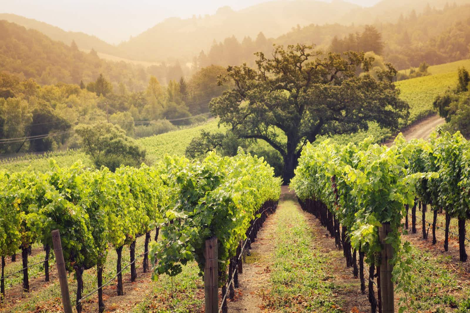 Just a short trip from San Francisco, Napa Valley's delights can be sampled within a weekend © YinYang / Getty Images