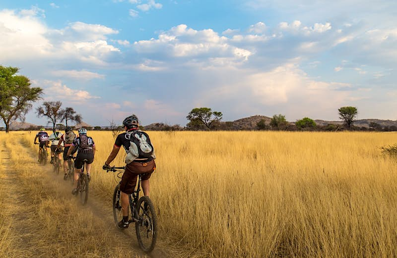 A line of cyclists pedal through tall yellow grasses with trees in the background