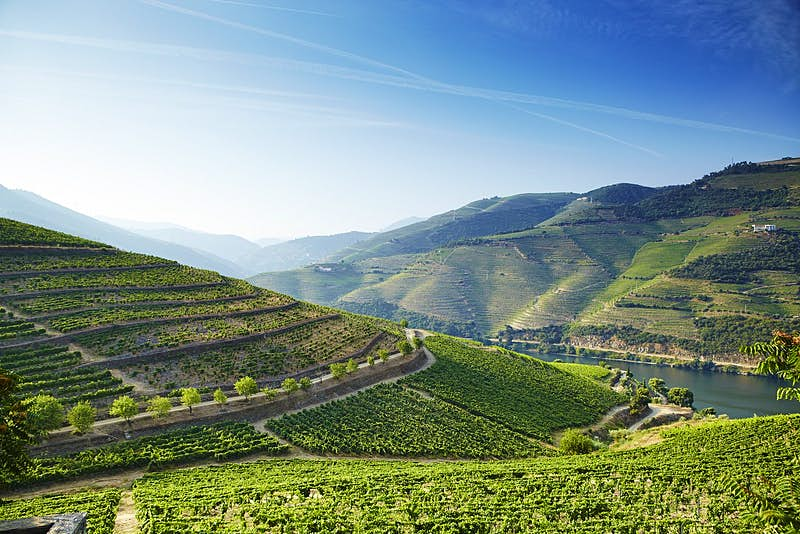 Steeply terraced vineyards rising from the banks of the River Douro in the Douro winemaking region.