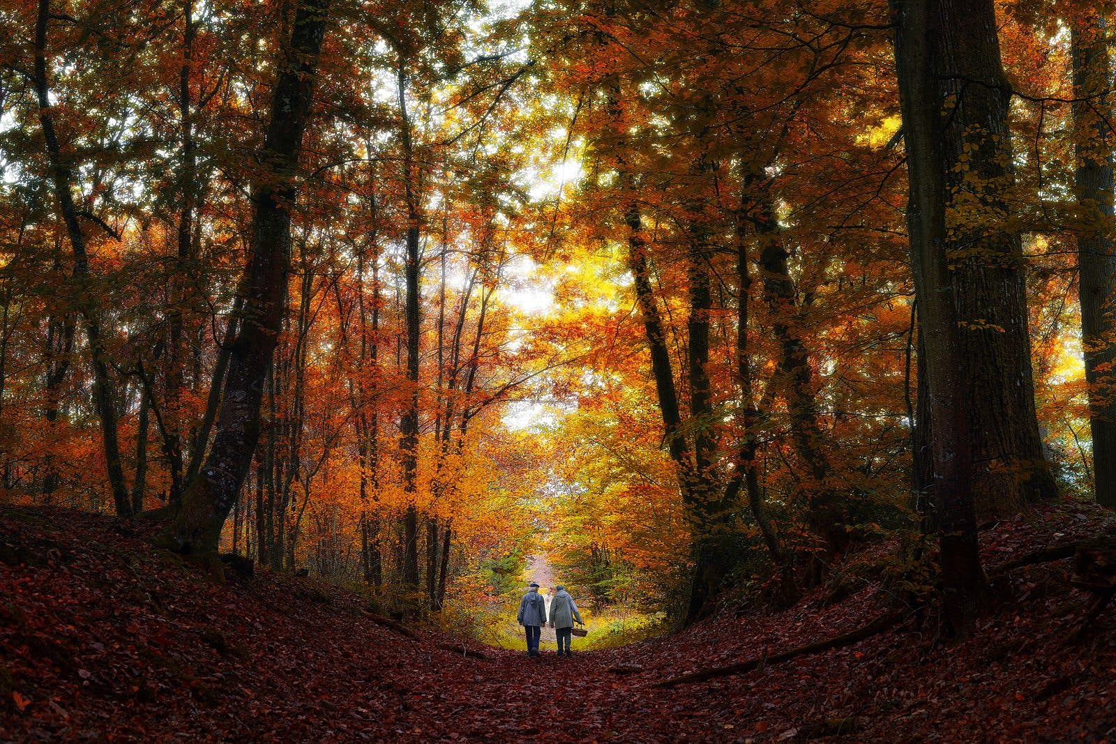 Two hikers walk along a path in the Forêt de Fontainebleau with autumnal trees either side of them
