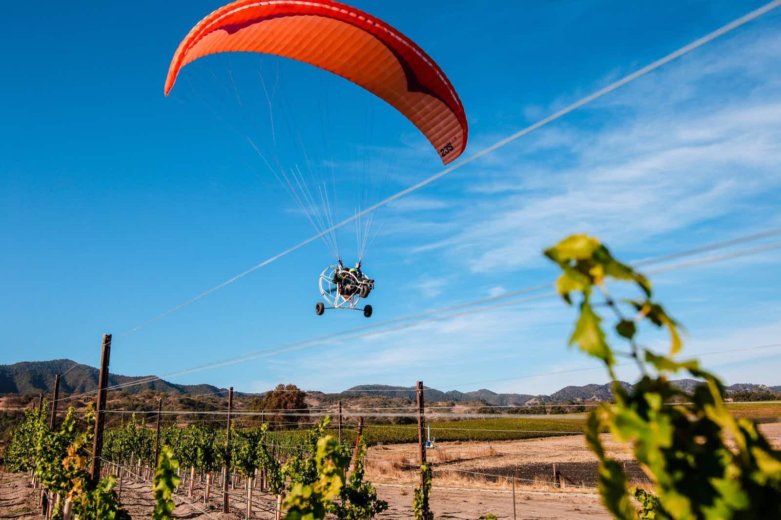 An orange parachute carries a paraglider through a blue sky above the grape vines at a vineyard in San Luis Obispo County, Calfifornia