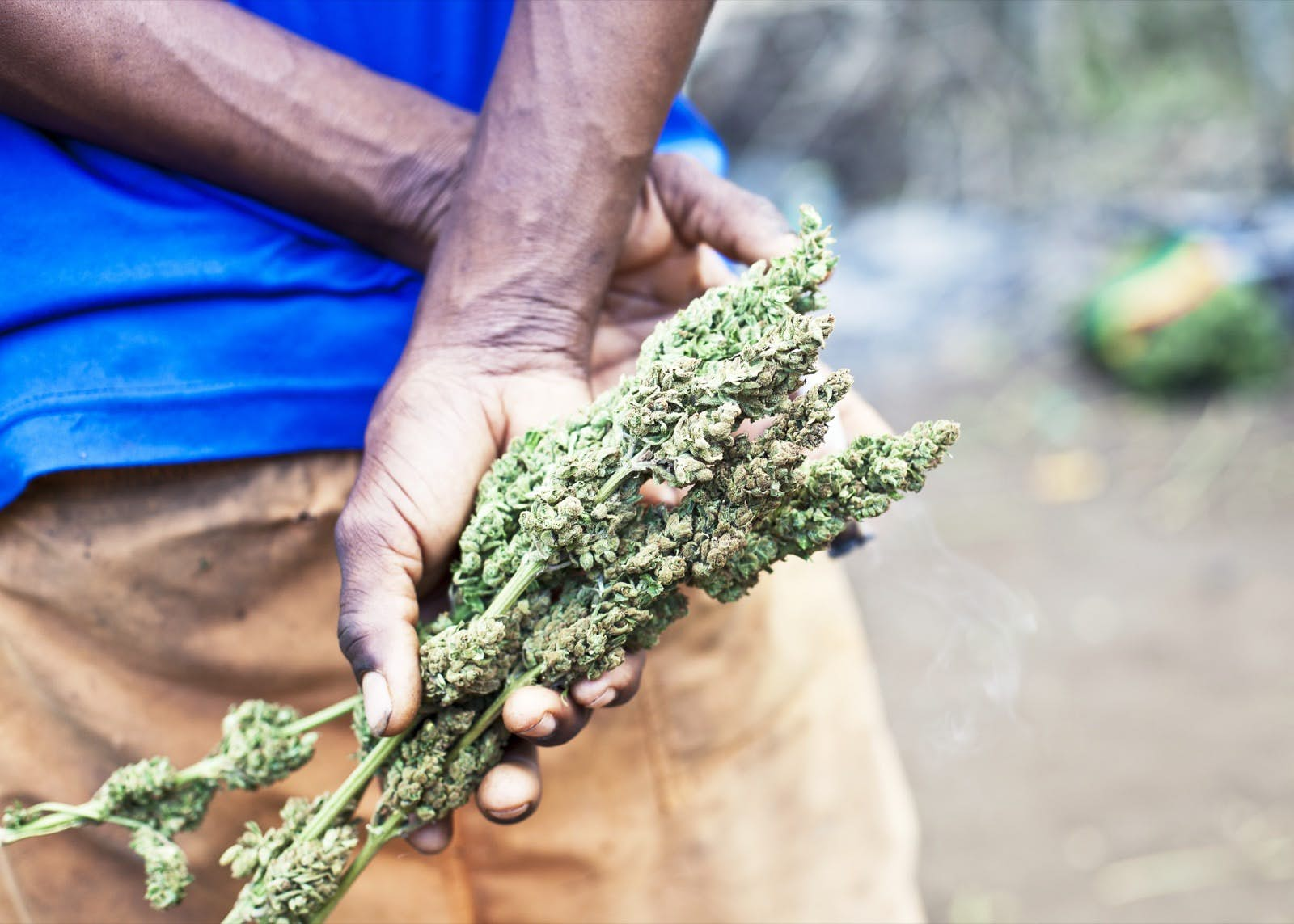 What You Need To Know About Smoking Weed Legally In Jamaica Lonely Planet