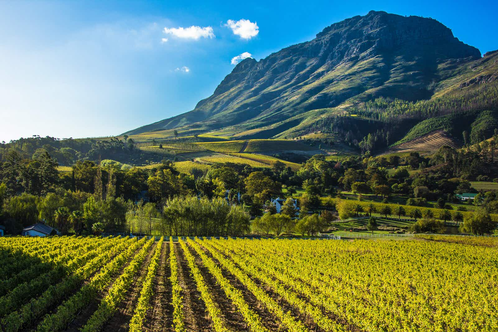 The slopes at the base of the mountains around Stellenbosch are home to no less than 100 wineries © James Penry / Getty Images