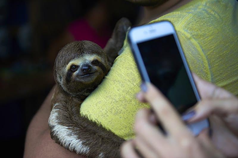 wildlife selfies