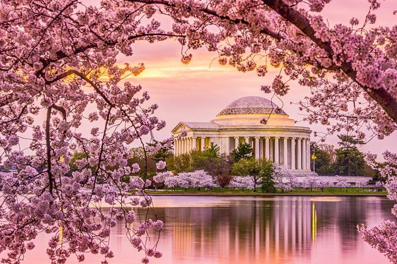 The domed rotunda of the Jefferson Memorial is reflected in the Potomac as a pink sky and cherry blossoms fill the sky; Best American architecture