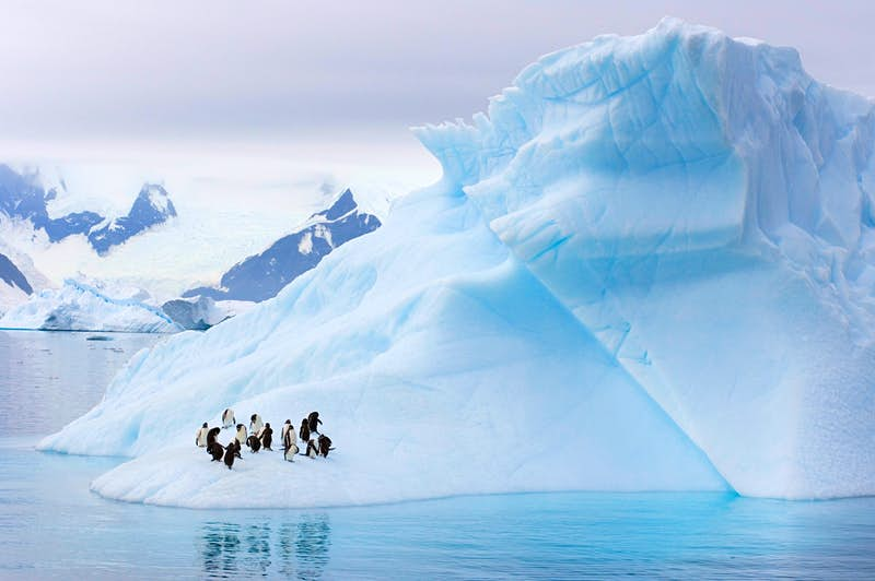 Gentoo Penguins and Chinstrap Penguins on an iceberg in Antarctica,