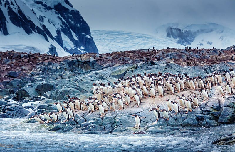 This sale on Antarctic voyages could make your bucket-list trip accessible - Lonely Planet