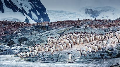 This sale on Antarctic voyages could make your bucket-list trip accessible