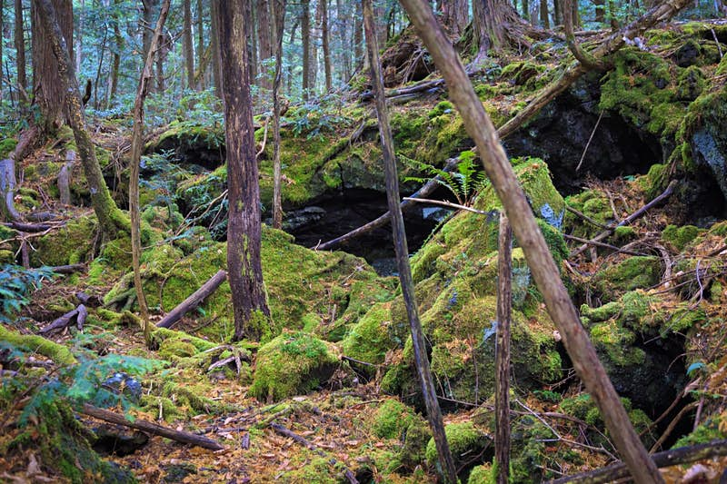 Green moss covers rocks among trees trunks in a thick forest; haunted places world