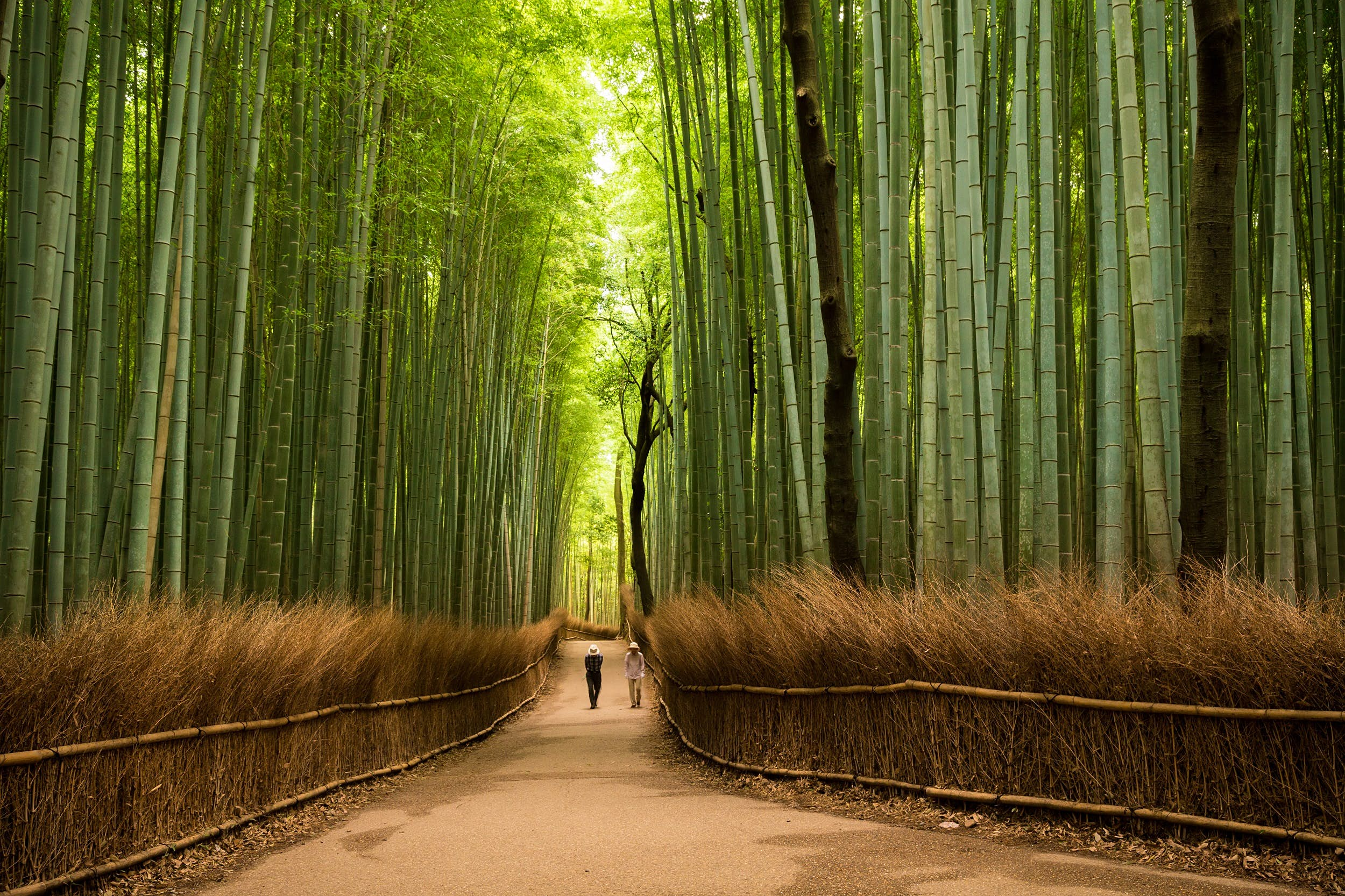 A narrow path, flanked on both sides by towering stands of bamboo, stretches into the distance.