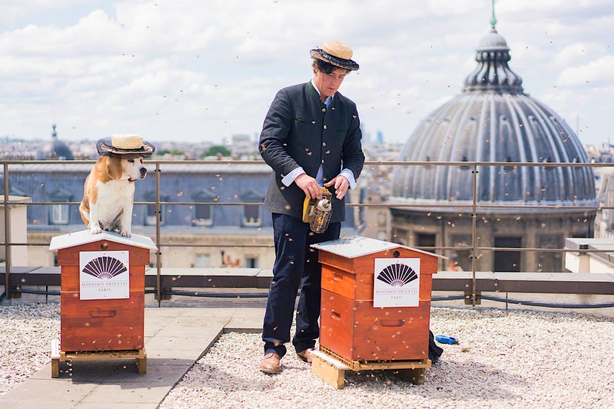 Rooftop beekeeper ensures this Paris hotel has honey