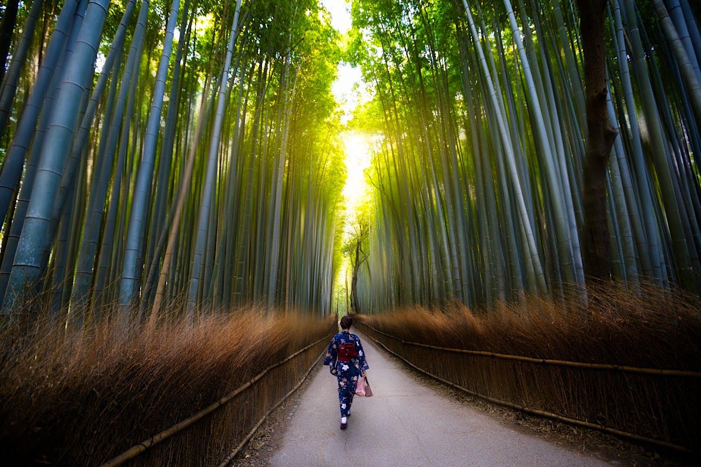 Uma pessoa andando pelos bosques de bambu de Arashiyama, Kyoto, Japão