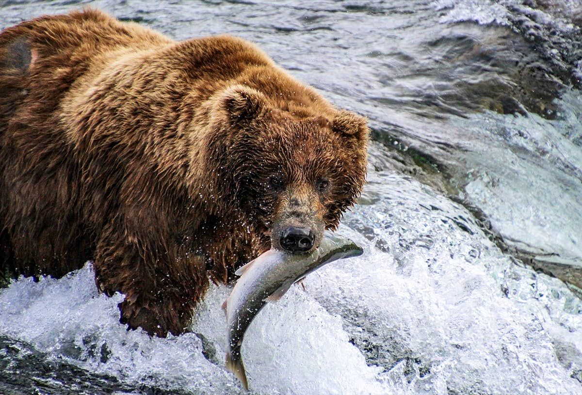 The best web cams for wildlife watching – Lonely Planet