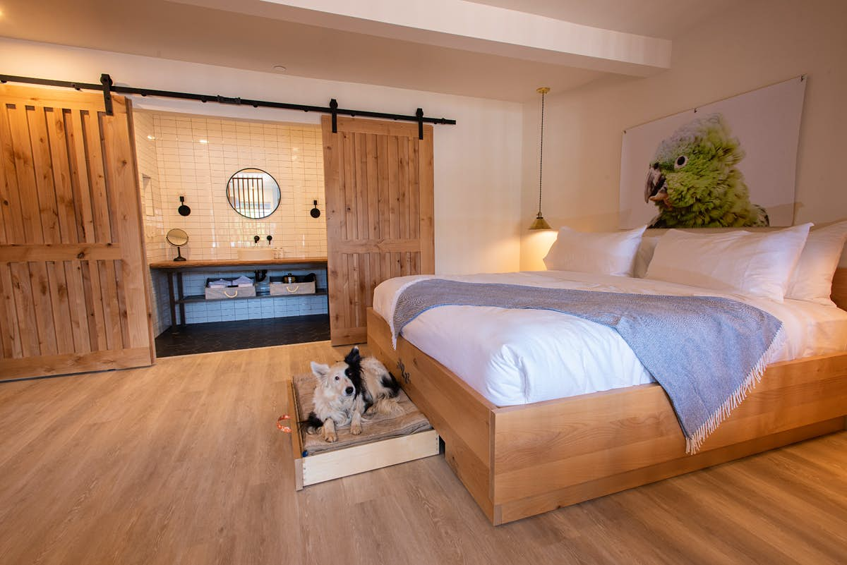Is this the most pet-friendly hotel in the world? - Lonely Planet