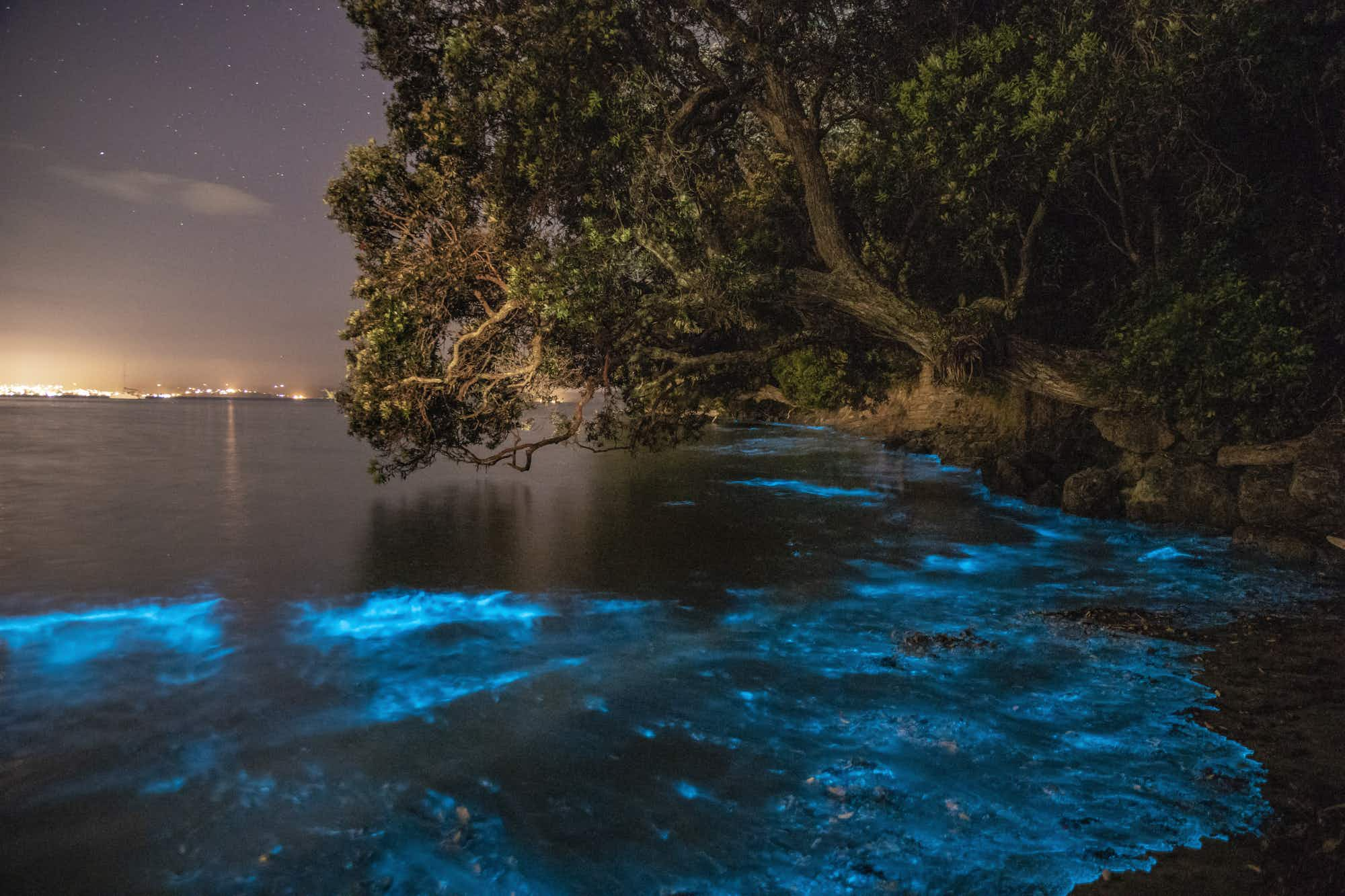 Why the waters around Auckland have been seen glowing blue