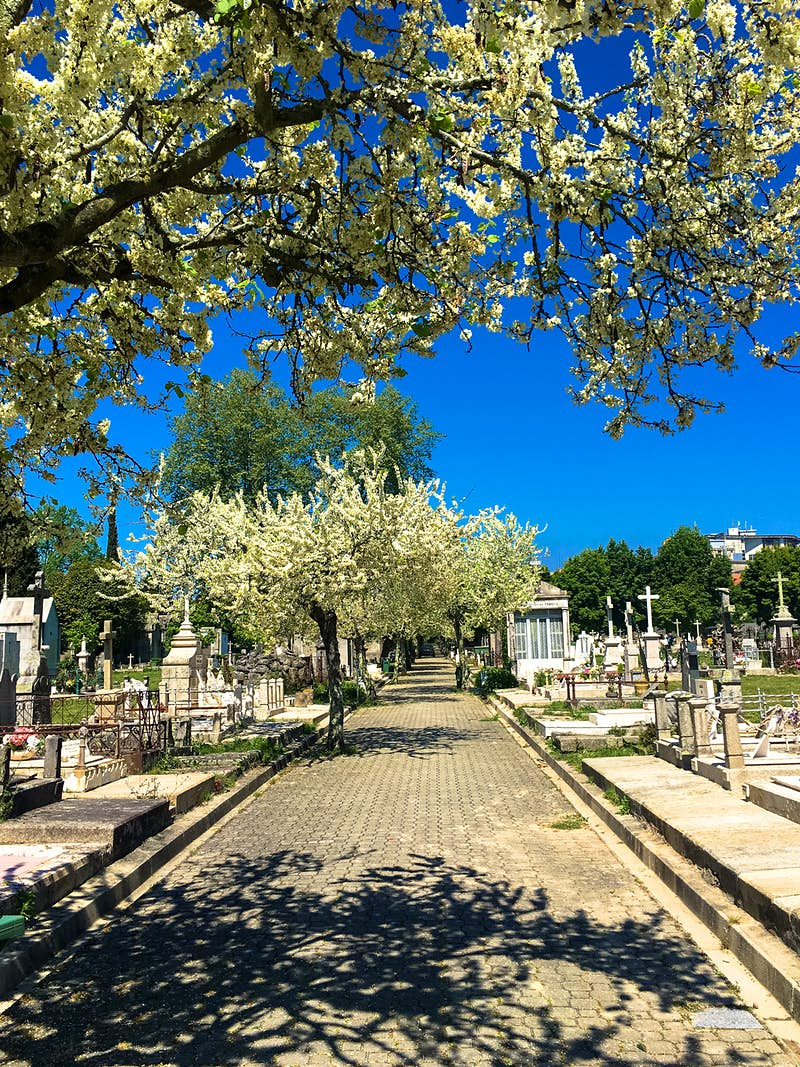 A paved, tree-lined walkway with overhanging blossoms is lined with hundreds of decorative headstones.