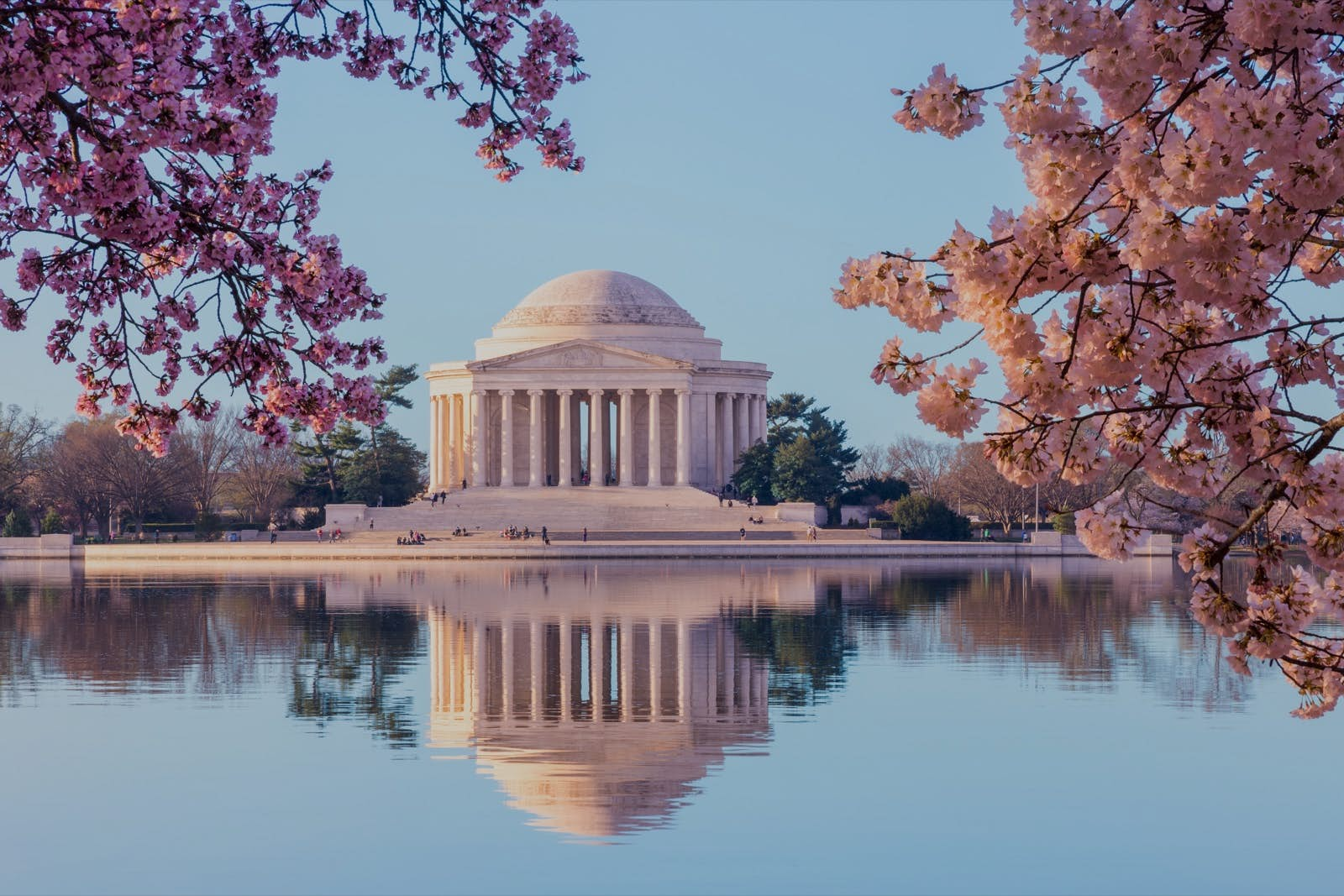 Washington DC doesn't want you to visit its beautiful cherry blossoms so it's put them online