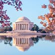 Cherry blossom trees frame the Tidal Basin and the Jefferson Memorial in Washington DC © Steven Heap / Getty Images