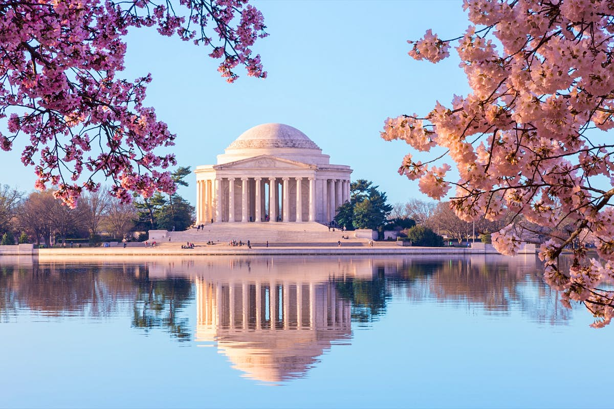 You can see Washington DC's beautiful cherry blossoms online