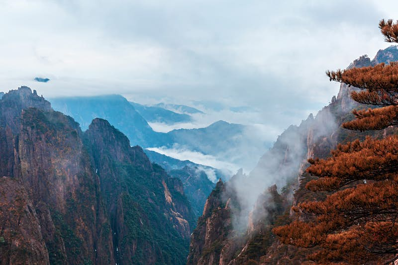 Mist clings to a mountain in China as a red-leafed tree dominates the foreground; Autumn colours