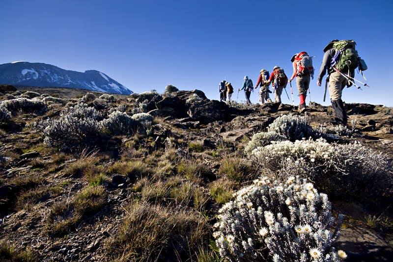 A line of mountain climbers ascend a mountain in Africa as scrub plants dominate the landscape around them; Climbing your first fourteener