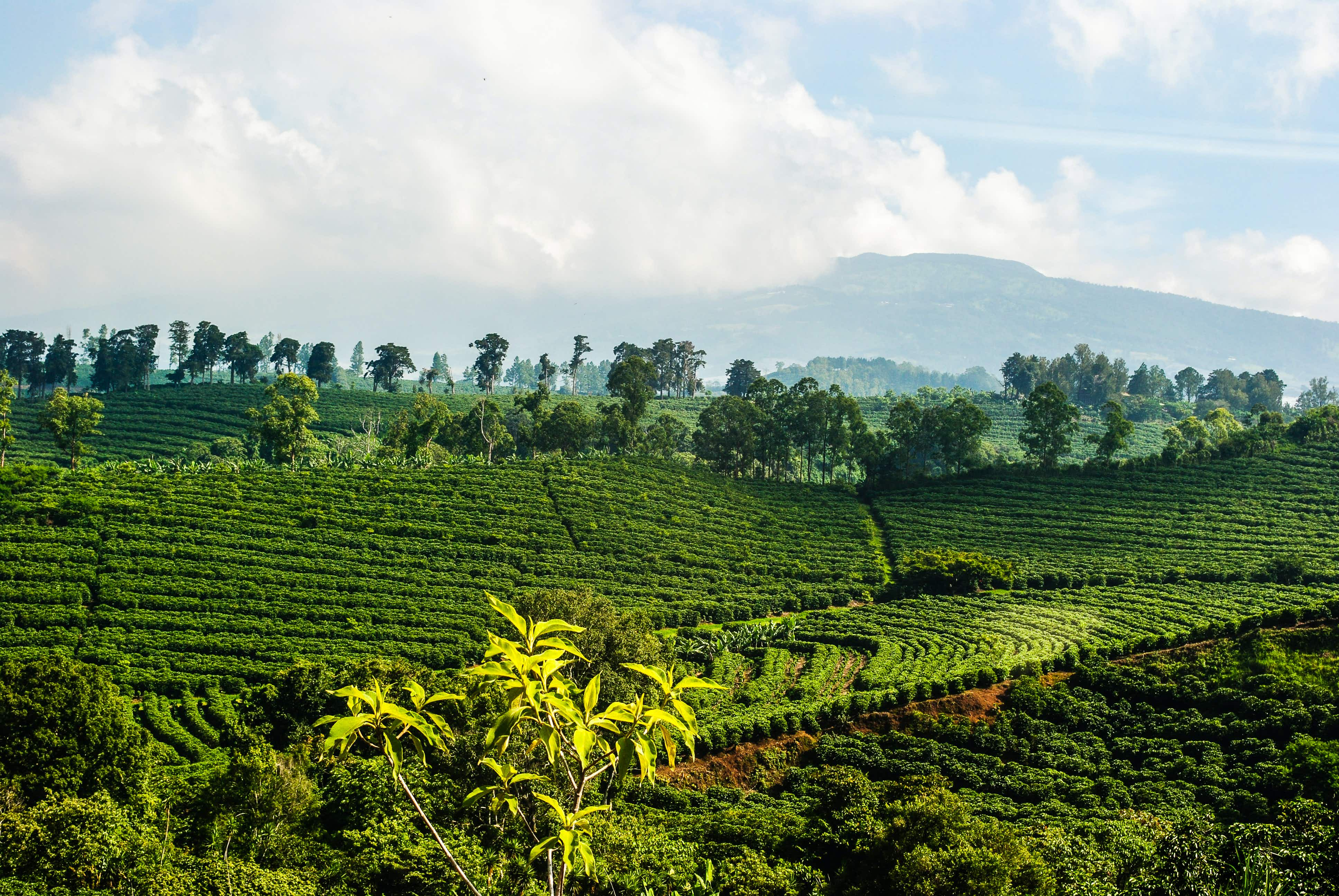 Costa Rica's mountainous terrain makes it ideal for coffee production © OliverJW / Getty Images